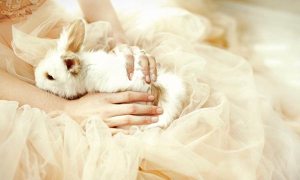 Złap króliczka
