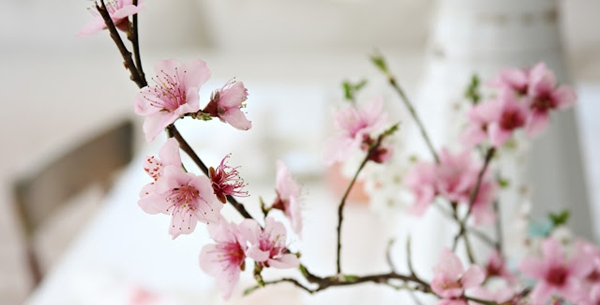 Wiosennie na stole