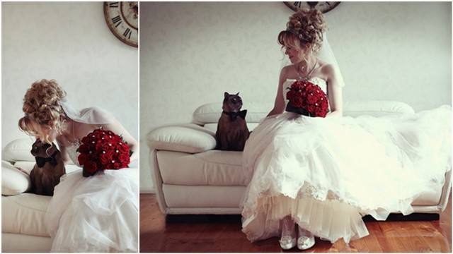 cat-wedding-11
