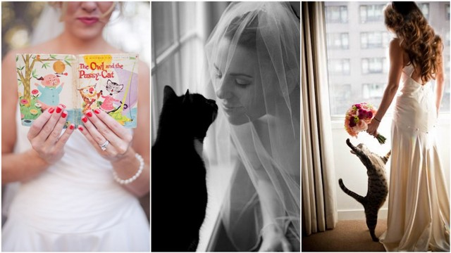 cat-wedding-13