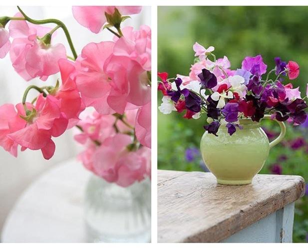 sweet-pea-wedding-flowers-9